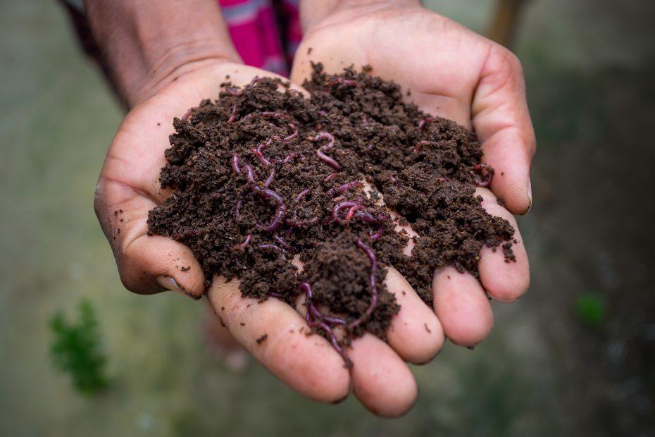 Come fare il compost senza compostiera